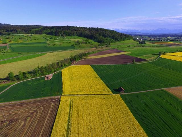 Jak odpowiednio chronić nasze uprawy kukurydzy?